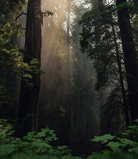 Zdj臋cie przedstawiaj膮ce las